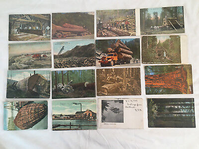 Lot of 16 Postcards, All Forestry and Logging, Woodsmen, Giant Red Woods