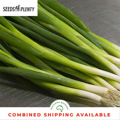ONION - Spring (Bunching) (1000 Seeds)