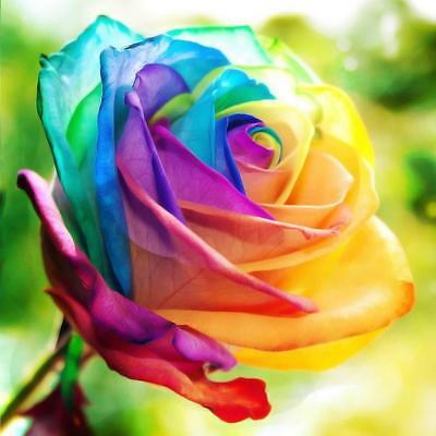 200pcs Rare Rainbow Rose Flower Seeds Multi-color Plant Home Garden # Pop