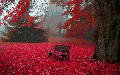 1p Auction Autumn HD Wallpaper Image Penny Auction Collection Free No Reserve