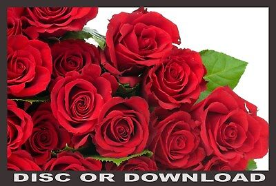 EXPERT ROSE GROWING / CULTIVATION ☆ Roses Manual Books Scanned - Download / Disc