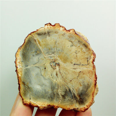 "2.9""121g Polished PETRIFIED WOOD FOSSIL AGATE DISPLAY Madagascar Y1078"