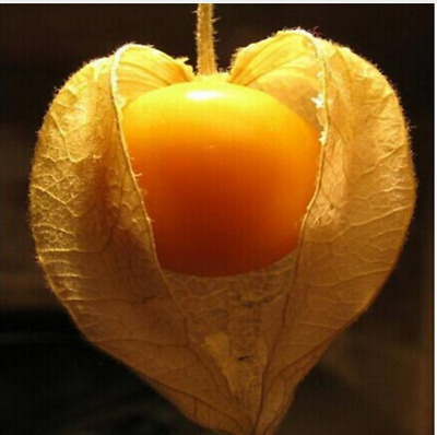 Physalis CAPE GOOSEBERRY Peruviana 50 Seeds
