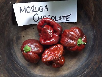Trinidad Moruga Scorpion Chocolate Chili - 5+ seeds - HOT RECORD!