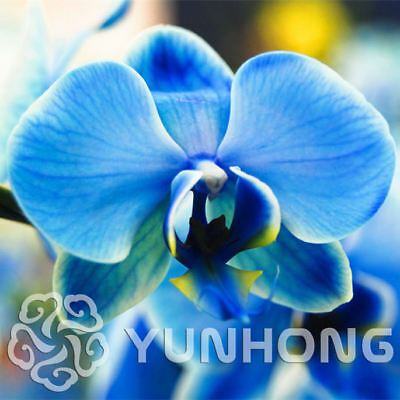 Birds Flower Lot Orchid Phalaenopsis Seeds Particles 100 Rare
