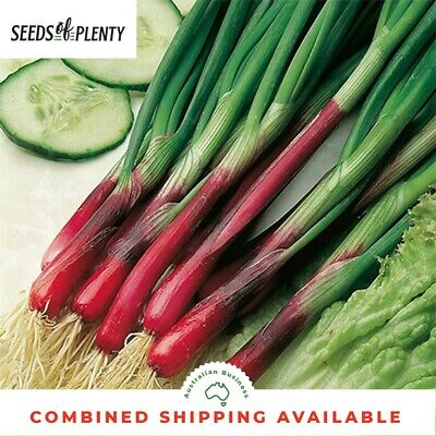 ONION - Spring (Rossi) (250 Seeds) ITALIAN RED HEIRLOOM VARIETY Bulk