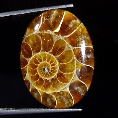 25.40Cts 100% Natural Designer Ammonite Fossil Oval Cabochon Loose Gemstone