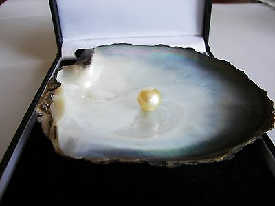 South Sea Gold Loose Round Cultured Pearl AA+ 12-13mm G.I.A CERT value $2,050)