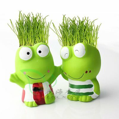 Mini DIY Magic Grass Frog Grass Head Kids Education Toy Christmas Decor Gift