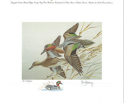 TENNESSEE #11 1989 DUCK STAMP PRINT GREEN WINGED TEAL by Roger Cruwys A.P