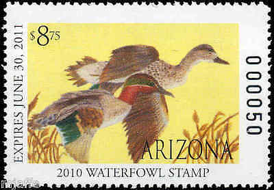 ARIZONA #26 2010 STATE DUCK - JUNIOR DUCK GREEN WINGED TEAL by Taylor Forbeck