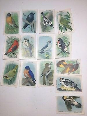 VINTAGE VICTORIAN TRADE CARDS, BIRDS, lot of 14, ARM & HAMMER, mint NINTH SERIES
