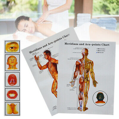 Poster Wall Carte Tableau Meridian Acupuncture Points Map of the Male Body Corps