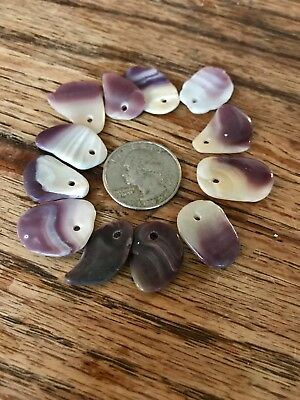 Wampum Quahog Drilled Shells Long Shaped Glossed Purple Clam Shell Lot of 12 W29