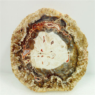 "4.2""278g Polished PETRIFIED WOOD FOSSIL AGATE Crystal DISPLAY Madagascar Y1107"