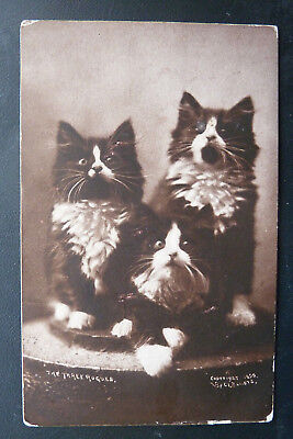 """Cat Postcard- Black & White Kittens """"The Three Rogues""""- Posted 1907"""