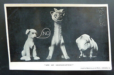 """Comic Postcard, Cat/Dog/Pig """"Are We Downhearted""""- Photo Bertolle & Son- 1906"""