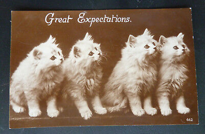 """Vintage Cat Postcard- Cute White Persian Kittens """"Great Expectations"""""""