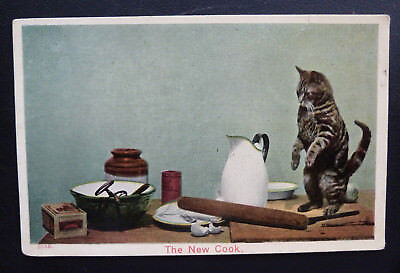 """Vintage Cat Postcard, Silver Tabby Cat """"The New Cook"""""""