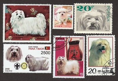 MALTESE *Int'l Dog Postage Stamp Collection* Unique Gift*