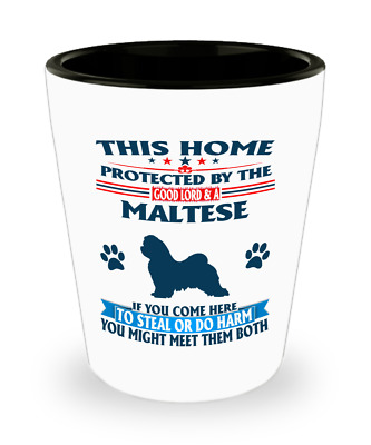 Maltese lion puppy dog,Maltese dog,Malteses,Malteses Dog,Maltese,Shot Glass