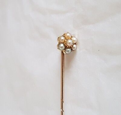 Victorian 15ct Yellow Gold Stick pin.Claw set with seven natural seed pearls