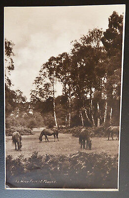 Real Photo Horse Postcard- The New Forest Ponies