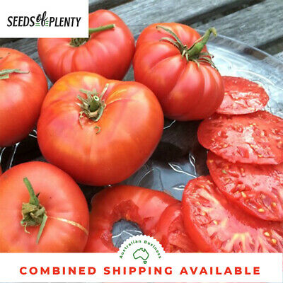 TOMATO - Brandywine (75 Seeds) BULK Heirloom