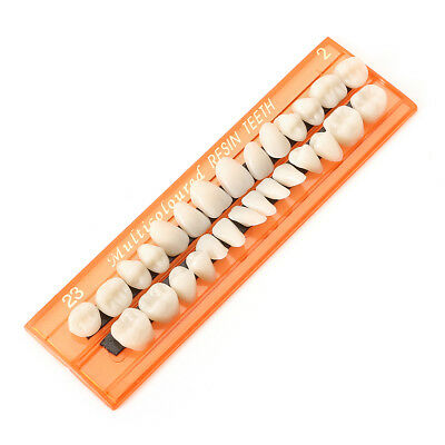 Dental Acrylic Resin Teeth 28 Units Denture Oral Cavity Science Dentist Student