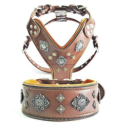 Bestia Aztec Set! harness and collar. BIG DOGS, top quality!