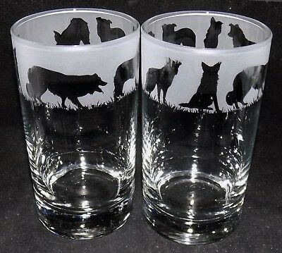 "New Etched ""BORDER COLLIE"" Hiball Glasses - Beautiful Gift - Free Gift Box"