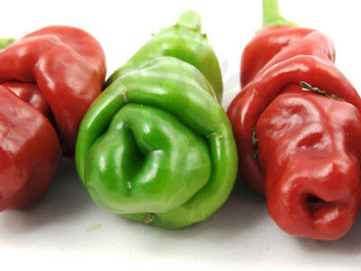 100 Seeds Peter Pepper Red Willy Chilli Heirloom Capsicum vegetable