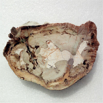 "4.4""222g Amazing PETRIFIED WOOD FOSSIL AGATE Slice Display Madagascar Y1153"