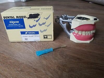 Kilgore Nissin Dentoform Typodont for Periodontic Perio Dental Hygiene P15DP