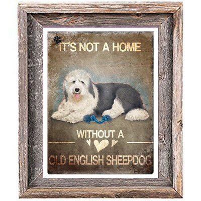 OLD ENGLISH SHEEPDOG distressed Art Print 8 x 10 image home office wall decor
