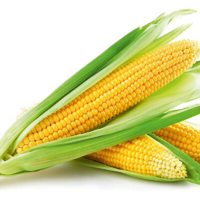 Vegetable Sweet Corn Sweetcorn Swift F1 25 Finest Seeds #4372