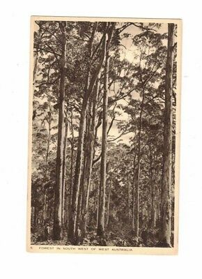 Australia Postcard, Forest on South West of WA