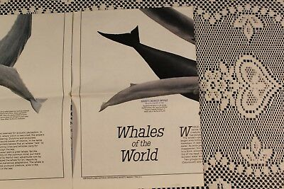 National Geographic Whales of the World 1976