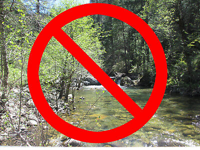 WARNING! - Shiny Yellow California Placer Gold Mining Claim Forest & Alleghany