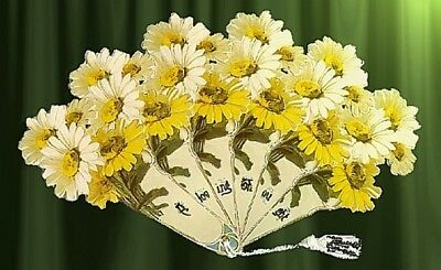 VICTORIAN Hand DAISYS  FAN greeting card! WOW!