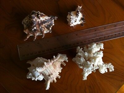 collection of 3 shells and coral