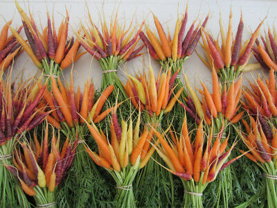 Vegetable Carrot Rainbow Mix 1500 Finest Seeds #4393