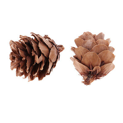 30Pcs Natural Dried Pine Cones Wedding Home DIY Craft Christmas Tree