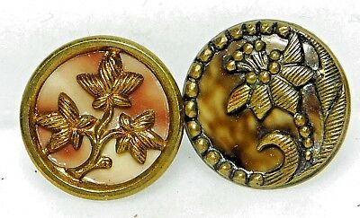 PAIR of CAPTIVATING Antique Victorian CELLULOID in Brass Buttons PLANT Life C14