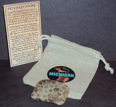 Michigan Petoskey Stone Cut, Polished & Coated 350 Million Year Old Coral Fossil