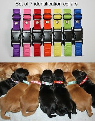 Set of 7 Plain Puppy ID Whelping Adjustable Identification Collars for Kit, Box