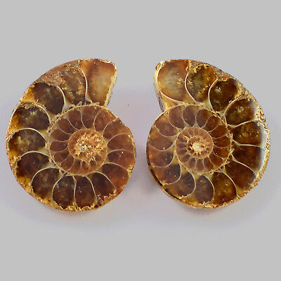 Natural Ammonite Fossil Cabochon Gemstone 27x21x7 mm 50 Cts 1 Matched Pair 2 Pcs