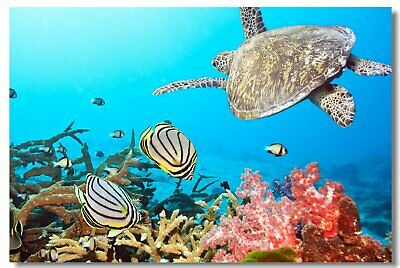 Poster Fishes Coral Reef Many Colorful Tropical Underwater Cloth Print 5