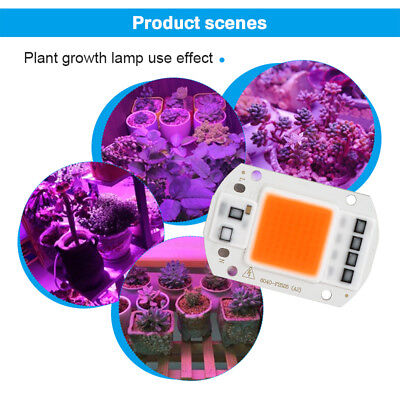 20W 50W 100W Vollspektrum LED COB Chip Grow Light Pflanzenlicht Lampe für Fluter
