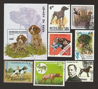 GERMAN SHORTHAIRED POINTER ** Int'l Dog Stamp Collection ** Great Gift Idea*
